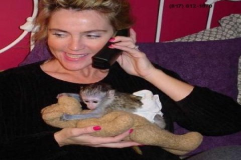 Lovely Capuchin Monkeys for Adoption1