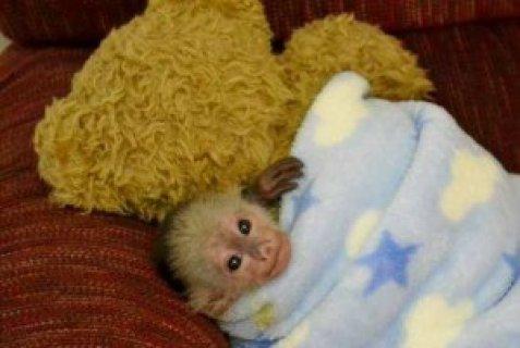 Gorgeous Monkey Ready for Adoption7