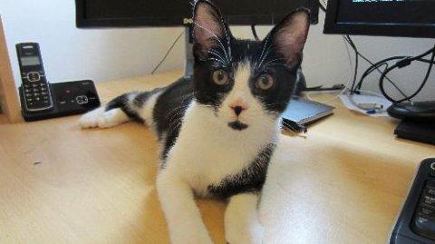 Kitttens urgently needing homes, Male, 3-6 months,... Tewkesbury
