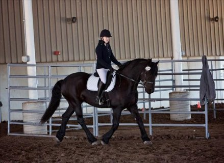 AMAZING AND ENERGETIC FRIESIANT HORSE FOR SALE...00
