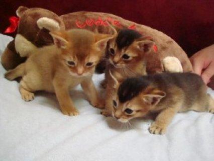 having 2 male cats