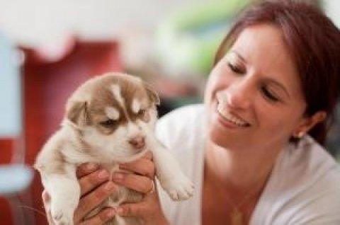 xmass Siberian Huskies Puppies For Adoption