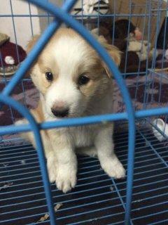 كلب بوجي 2