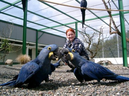 Cage and Hyacinth Macaw Parrots For sale