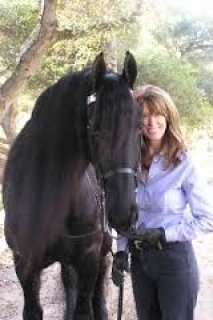 Lovely Friesian Male Horse for Sale