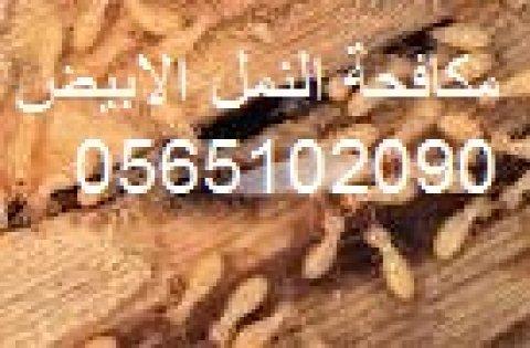 شركة مكافحة النمل الابيض بشرق الرياض  0565102090 مكافحة حشرات