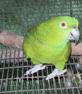صور Available baby parrots for sale 1