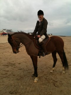 Gorgeous Arabian horse for good home