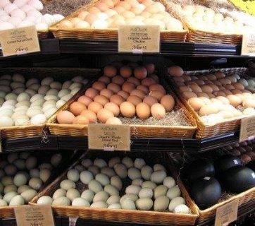 نبيع شمعة مضاءة البيض خصبة جدا من جميع أنواع الببغاوات
