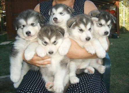 NEW HOME WANTED FOR MY PUPPIES
