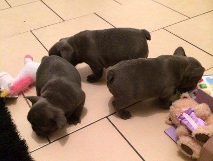 ***wow** Kc Reg Soild Blue Babies (boy & Girl )