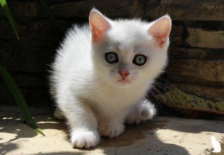 Kc Registered Persian kittens ..