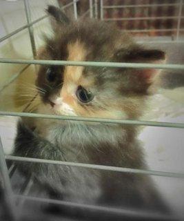 قطه جميلة ولعوبة للبيع