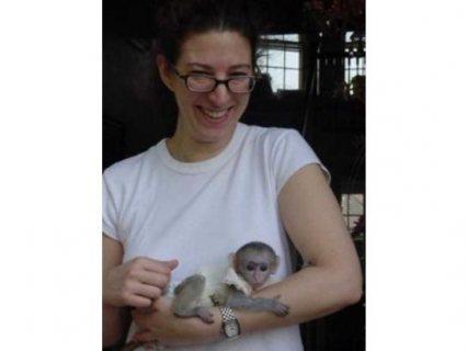 Male and female Capuchin monkey for adoption
