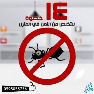 شركة مكافحة حشرات بالرياض والدمام |شركة الكمال 0595055756