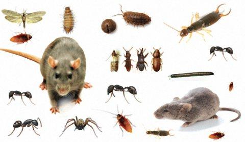 شركة مكافحة النمل الابيض ورش الدفان بابها وخميس مشيط0541863669