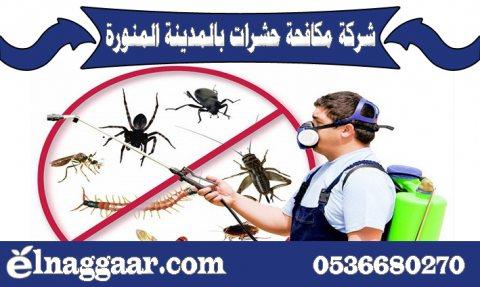 شركة مكافحة حشرات بالمدينة المنورة 0536680270 شركة النجار