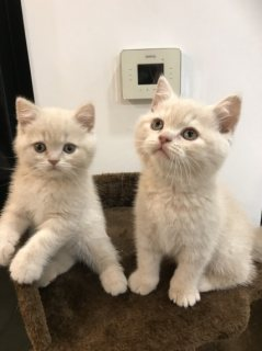Two cute kittens for adoption