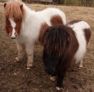 Cute Horses Available For Sale