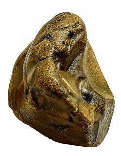 حجر حر  - لهواة جمع الغرائب ثعبان متكون احفورى - من متحف الغرائب