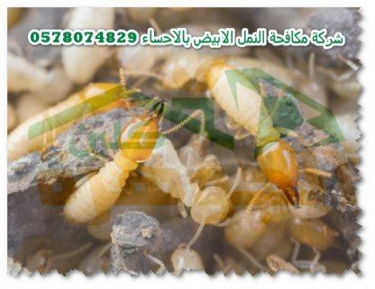 شركة  مكافحة النمل الابيض بالاحساء 0578074829 الجوهرة كلين