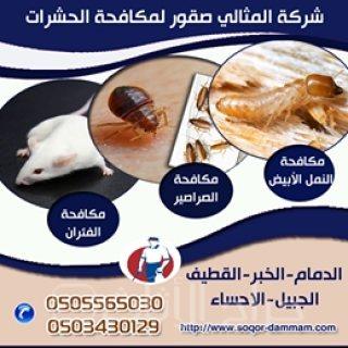 شركة تنظيف بجازان 507060415 مكافحة حشرات بجازان