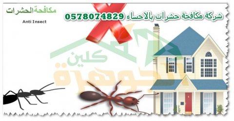 شركة مكافحة الحشرات بالاحساء 0578074829 الجوهرة كلين
