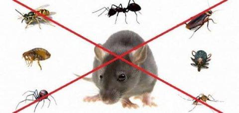 شركة مكافحة حشرات بالمدينة المنورة بخصم 25% | 0595303046 |