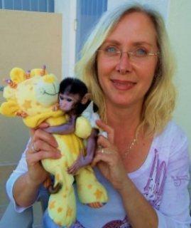 جميل القرد كابوشين الطفل