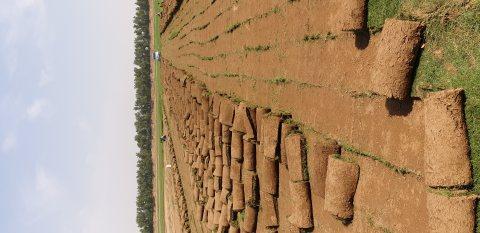 مزارع نجيلة طبيعية توريد وزراعة من أجود الأنواع0541931012