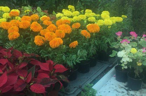 مشاتل في جدة لتوريد جميع أنواع نباتات ونخيل الزينة 0590449939