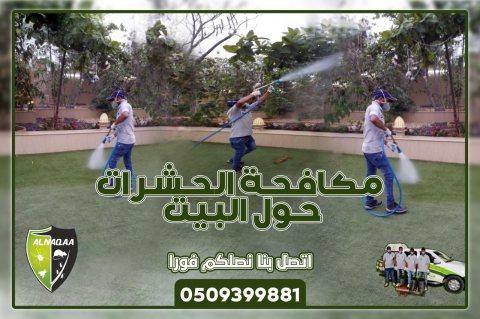 مكافحة الرمة في راس الخيمة , شركة رش مبيدات , النقاء لمكافحة الحشرات 0509399881