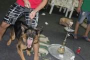 للبيع كلب جيرمن عمر سنة و4شهور مدرب طاعة وشراسة