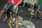 للبيع كلاب جيرمن شيبرد مدربة