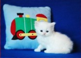 persian kittens for sale-0987