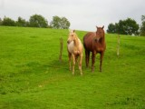 cute horses for Sale