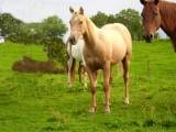 Beautiful well behave horse for sale