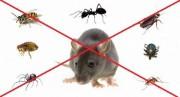 شركة المدينة للقضاء على الحشرات 0542742095_0509178637