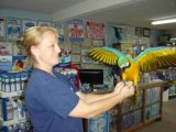 Blue, Gold Blue and Gold Macaw
