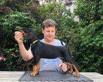 Doberman Puppies for Sale