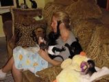 Gorgeous baby Capuchin monkeys for sale.